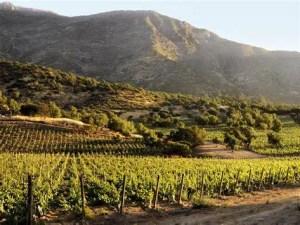 rutas del vino-valle del maipo