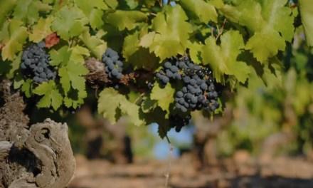 Hablemos de viñedos de más de 100 años en España