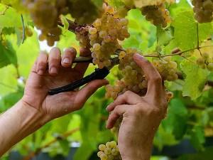 Los vinos de Pazo Señoráns