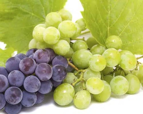 D.O. Vino de Toro: nuevas uvas, la Moscatel y albillo real