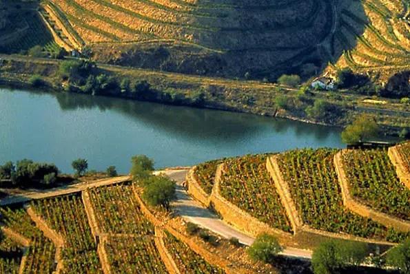 10 fundamentos del vino y una experiencia gratificante
