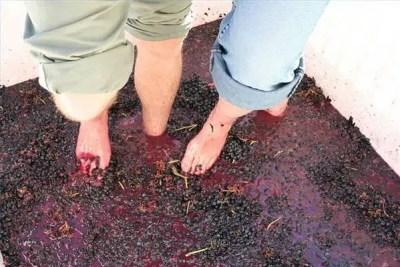 Fundamentos del vino
