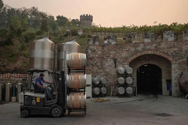 Producción mundial de vino en 2020 y algunas cifras de 2019