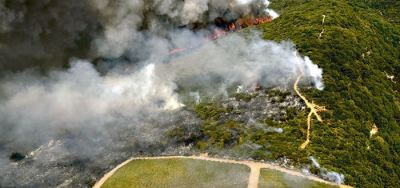 Afectaciones de los incendios forestales en la producción mundial de vino.