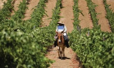 Ruta del Vino de Baja California: zona que concentra el 80% de la producción de vinos nacionales