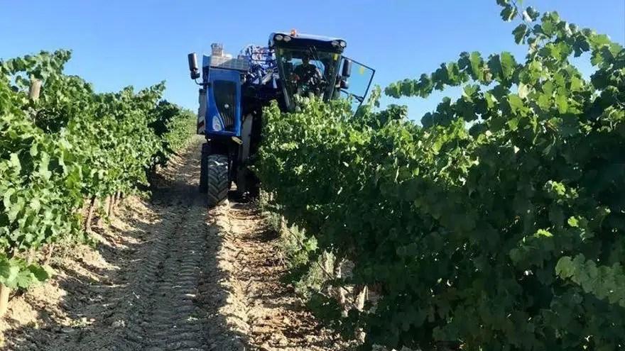 Vino aragonés incrementa un 11,7% de exportaciones en el primer semestre
