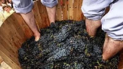 La pisa de uva