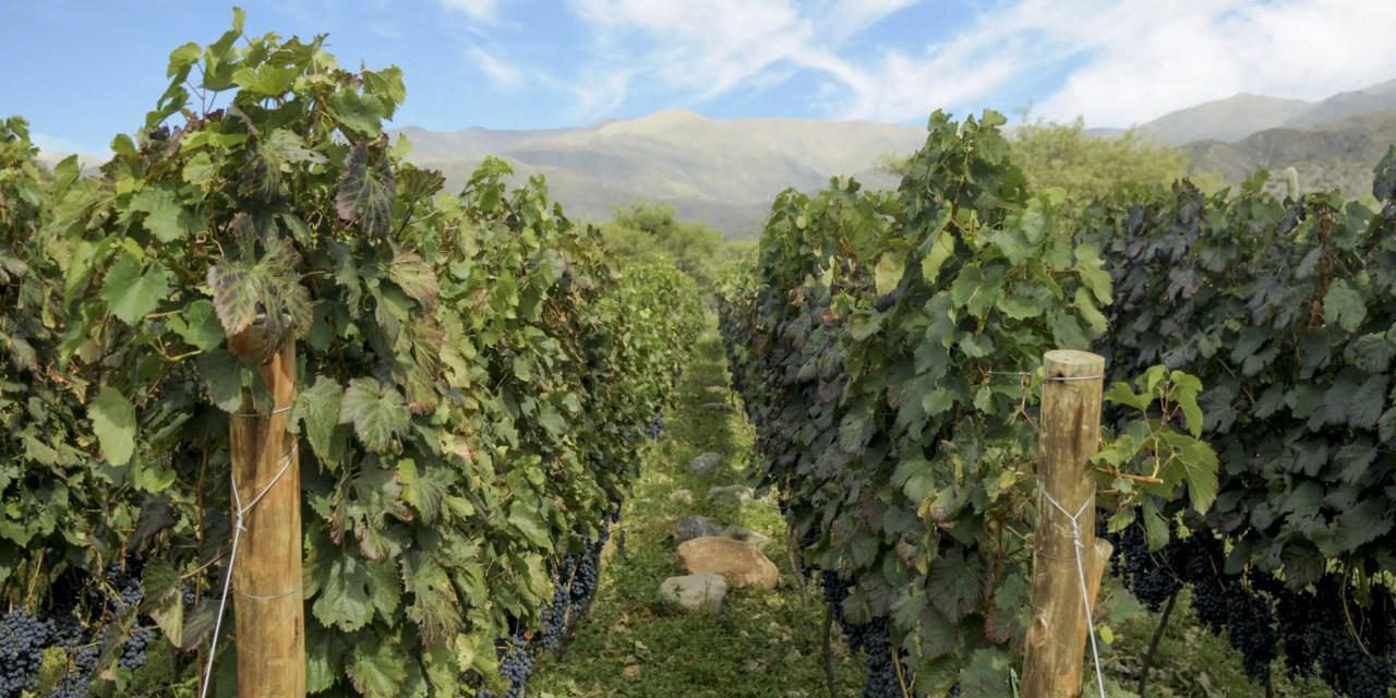 Exportaciones de vino: Argentina coordina acciones para la obtención de divisas