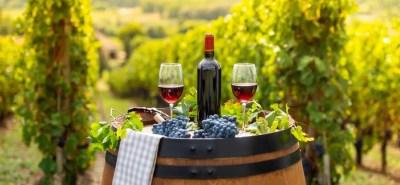 vinos potosino