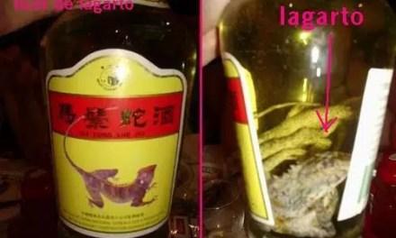 Licor de lagarto: ¿Te atreverías a probarlo?