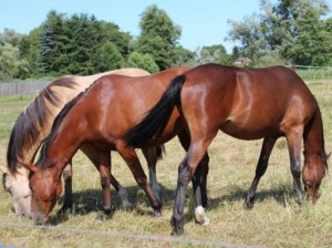 Tips Hipícos | Colic: Death or Prevention