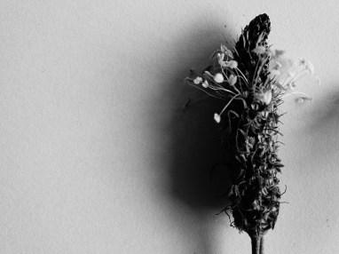 So eine einfach simple Blume kann so viel Style haben.