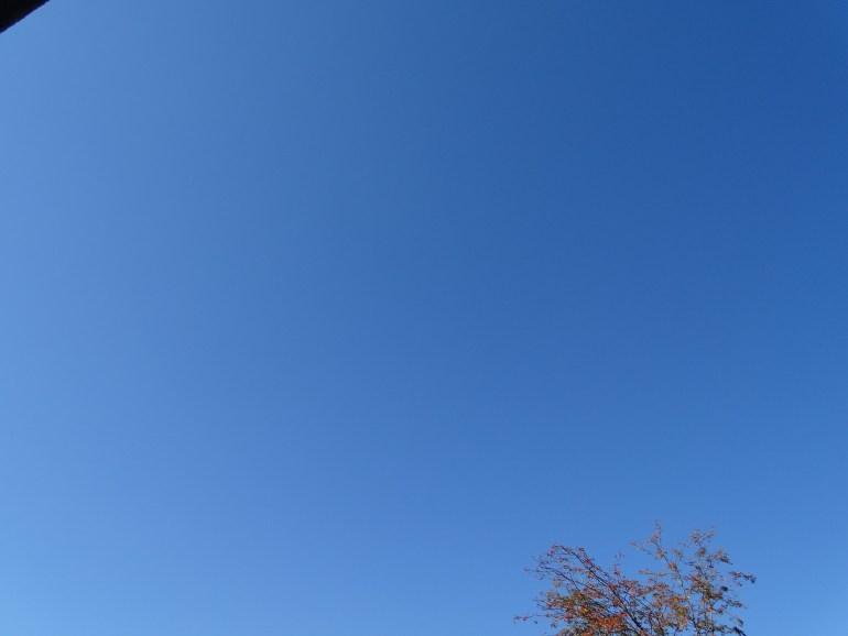 blau 12v12