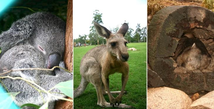 Australien Tiere | 4 Wochen Australien - Reisetipps, Sehenswürdigkeiten und Highlights der Ostküste