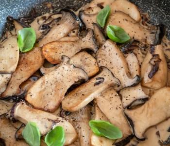 Cremige Kräuterseitlinge, einfaches Pfannengericht