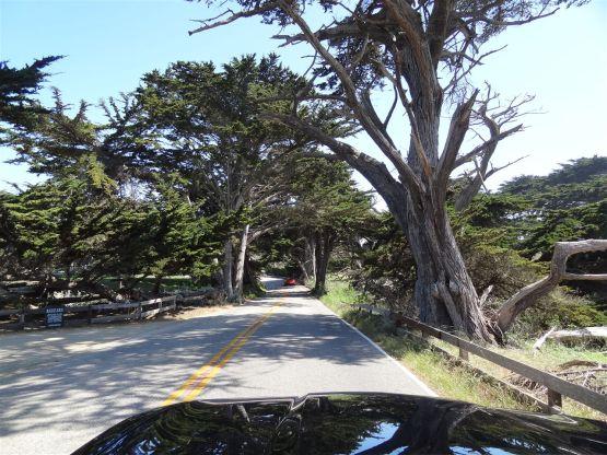 17-Mile-Drive