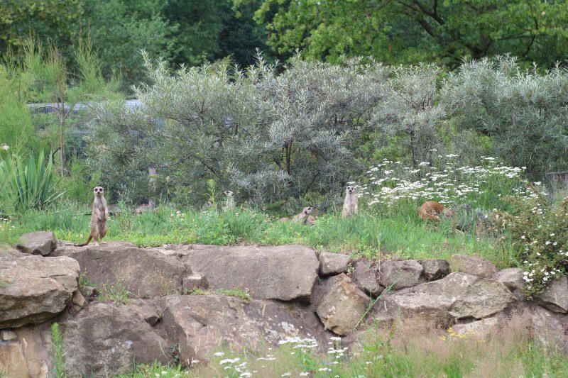 dierentuin nordhorn