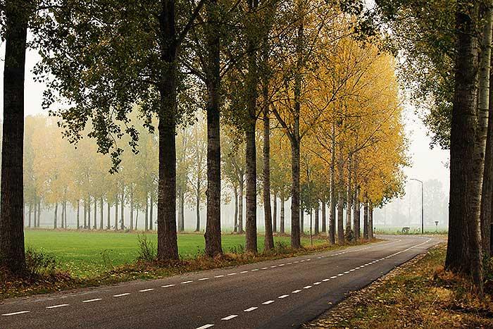 Weg met dieptepunt in herfsterige mist