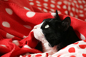 Onder de dekens