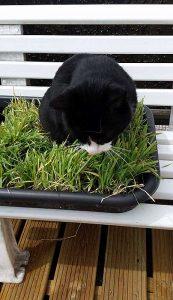 Doezel eet gras terwijl ik hem kam