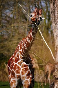 7 redenen om naar Zooparc Overloon te gaan