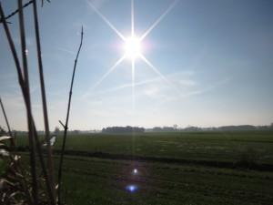 fietsen,zon,ganzen,vaart,herfst