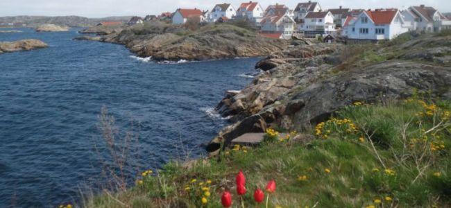 Zweden,Tjörn,Klädesholmen,tulpen,zee