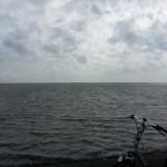 Ameland,fietsen,Waddenzee,waddendijk,2015
