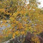 Noorwegen,herfstkleuren,berkje,2015