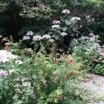 tuin,juli 2015,Friesland,landgoed