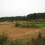Zweden,Tjörn,Lekander,zonnebloemen