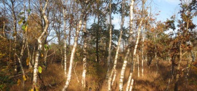 herfst,Friesland,kleuren,bos,heide,fietsen