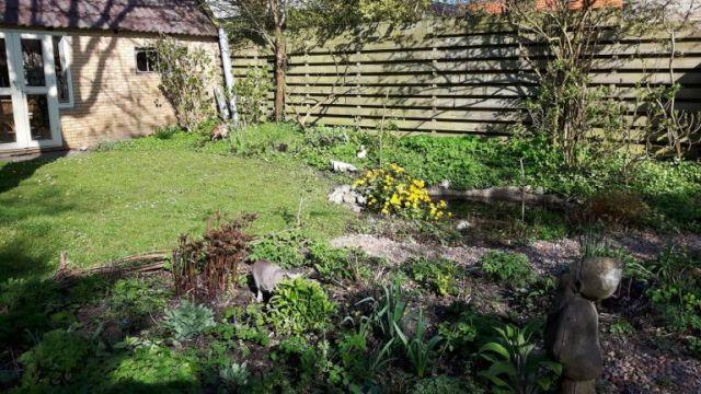 tuin,zon,dotters,poezen,voorjaar,april 2016