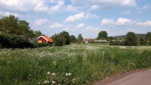 Zweden,mei,2016,bloeiende weilanden,fluitekruid,seringen