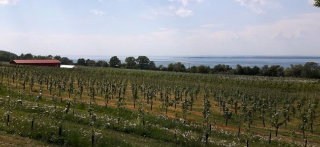 Zweden,Vättern,bloeiende appelboomgaarden,mei,2016