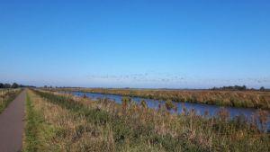 Friesland,Opsterlandse Compagnonsvaart,16-10-16, zon en zomer, fietsen