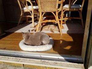 Lekker in de zon in een mandje