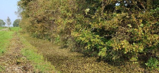 Fietsen - herfst in het bos in Friesland