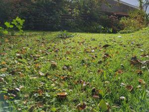 Een tuin vol kastanjes!