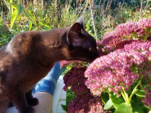 Pientje durft eindelijk aan de Hemelsleutel bol bijen te ruiken