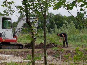 boomgaard, drainage