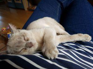 Prins Pommel - een heel klein Pommeltje
