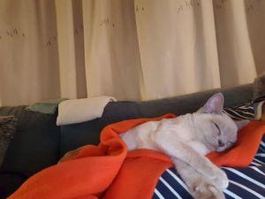 Covid19 - weer thuis en een heel ziek Pommeltje