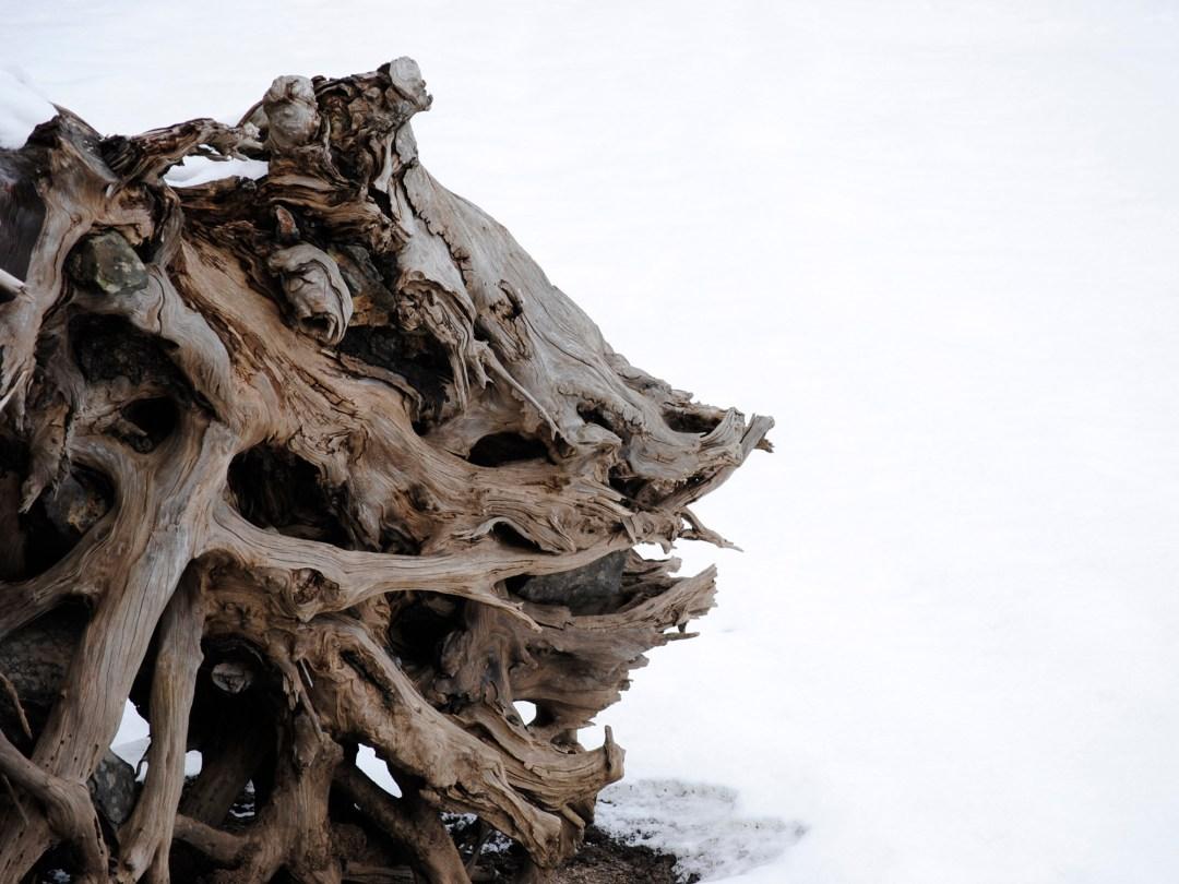 Elegant Exposed Root