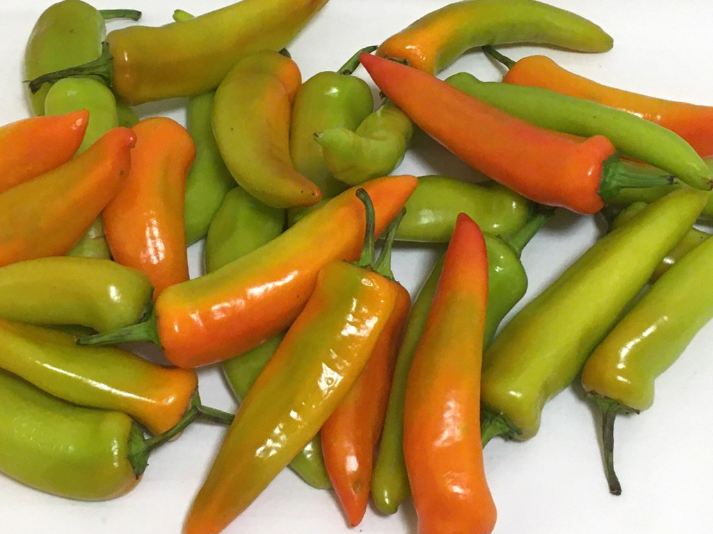 Hot Hungarian Peppers