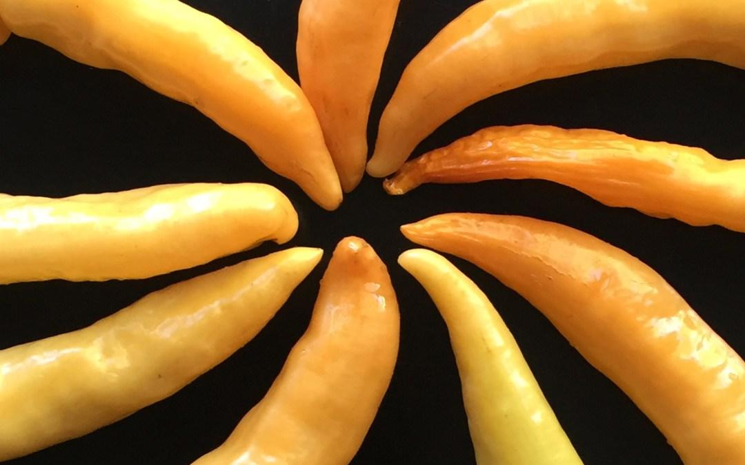 Hot Hungarian Pepper Pinwheel