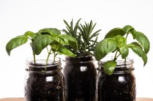 How To Make an Indoor Herb Garden for your Kitchen