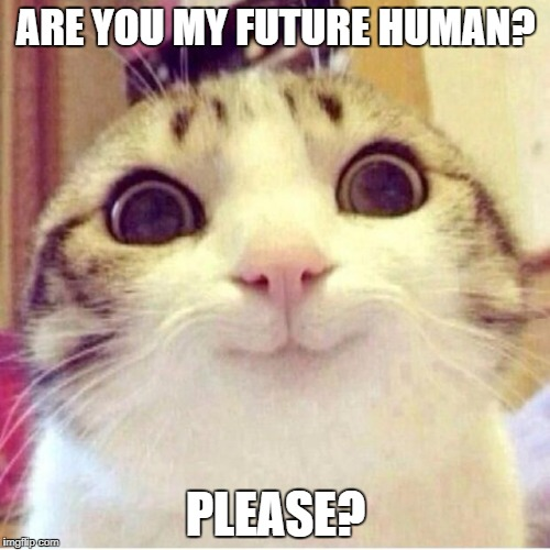 adopteer je kat