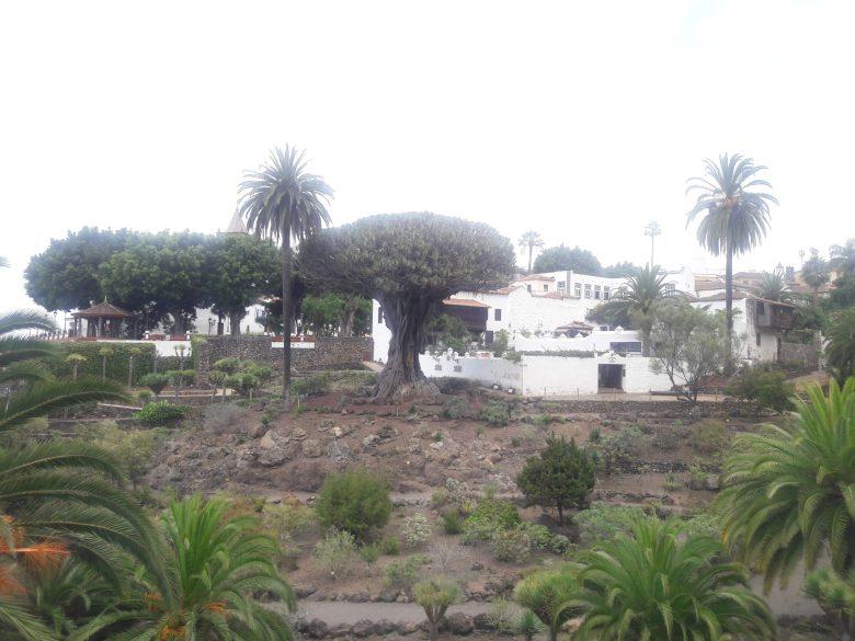 Parque del Drago Milenario