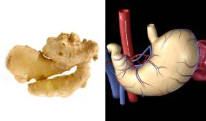 Ginger-StomachFoods-That-Look-Like-Body-Parts